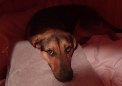 Pes-Fanda